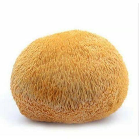 山西省太原市小店区 特级猴头菇。一斤起批。农家自己批发价格没有中间商