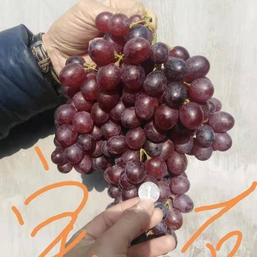 龙口市 冷库的红宝石葡萄大量上市