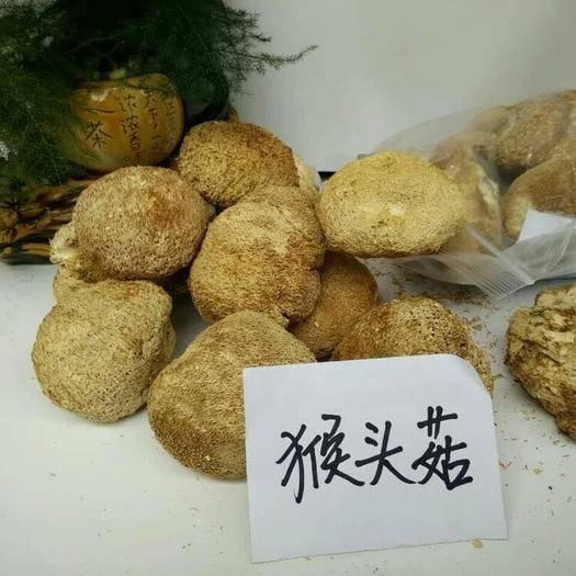 四川省广元市利州区 天然山珍—猴头菇