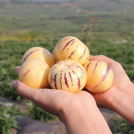 石林彝族自治縣 人參果包郵5斤裝圓果石林特產鮮甜多汁水果批發