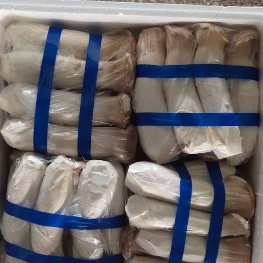 山东省淄博市淄川区 新鲜杏鲍菇现发现摘蘑菇香菇菌类批发特产