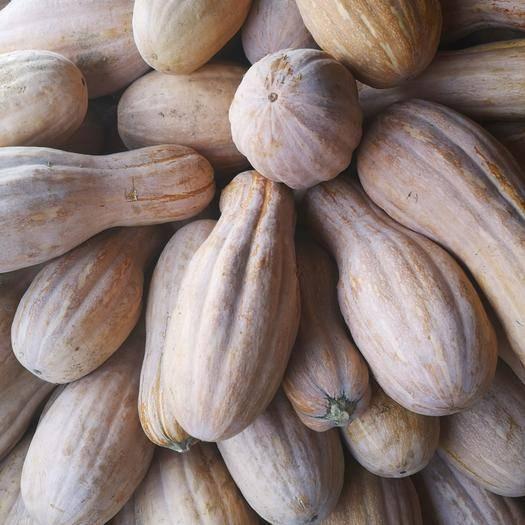 南阳邓州市 金韩密本南瓜,全红瓜,8成熟的都有货