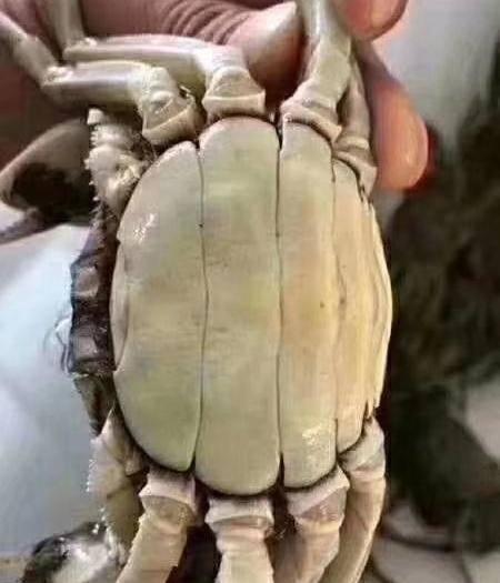 泗洪县 江苏精品,洪泽湖大闸蟹规格硬,一件代发