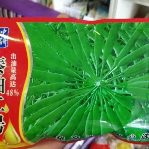 商丘夏邑县紫油菜种子 秦油二号油菜种子