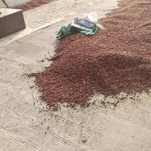 济南 酸枣核出7克,今年的货10吨左右