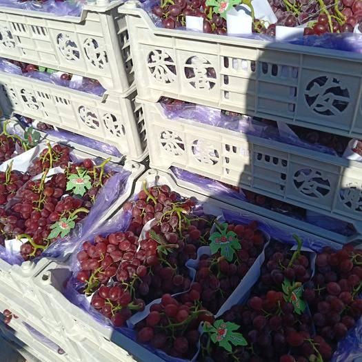 栖霞市红宝石葡萄 1.5- 2斤 5%以下 1次果
