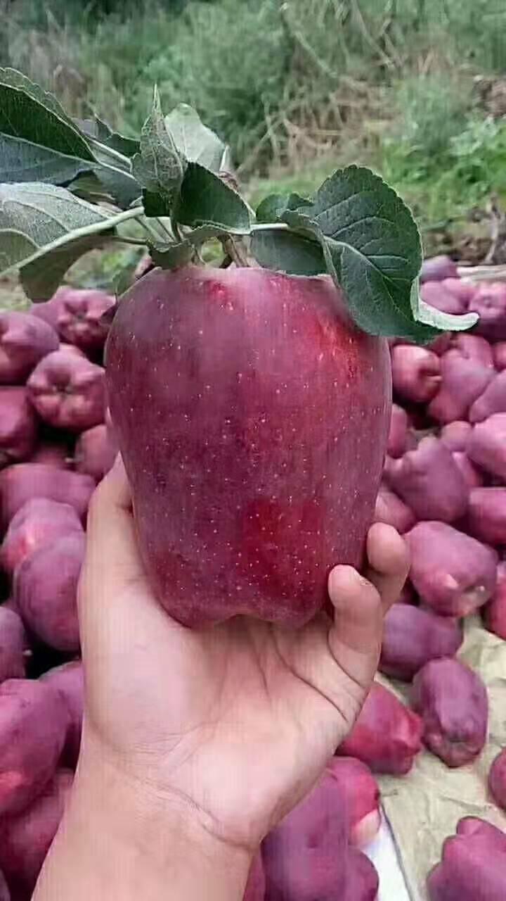 花牛蘋果  蛇果批發零售