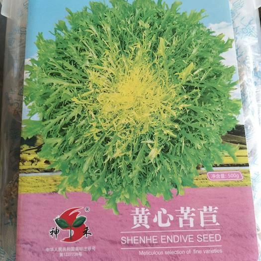 沭阳县 黄心苦苣种子每罐500克