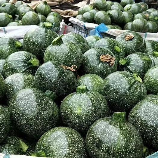 广州绿皮西葫芦种子 荣耀圆葫芦(膨果速度快,光泽好,卖价高)