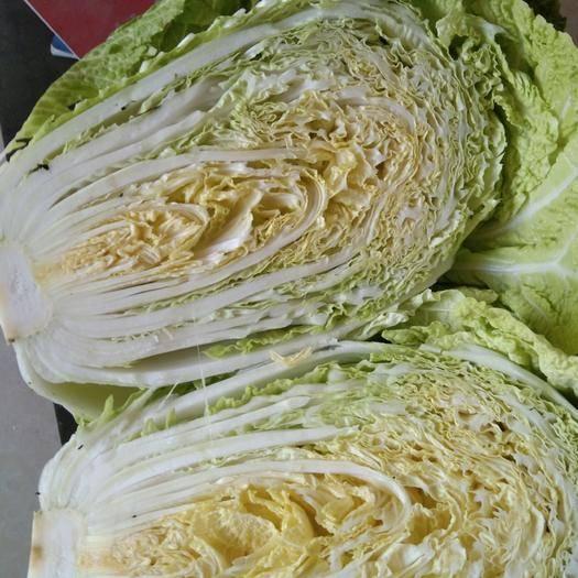 绥化肇东市超级黄心菜 矮棵黄心白菜,欢迎新老客户选购