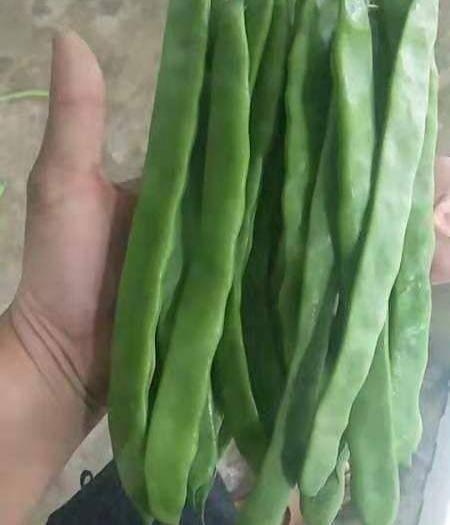 云南省保山市腾冲市 精品扁豆价格优惠质量上乘,产地发货。