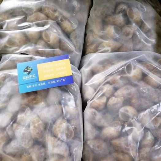 广州荔湾区 正关印度花螺,干净无沙,一手货源