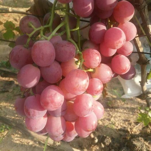 海阳市 自家的葡萄特别甜