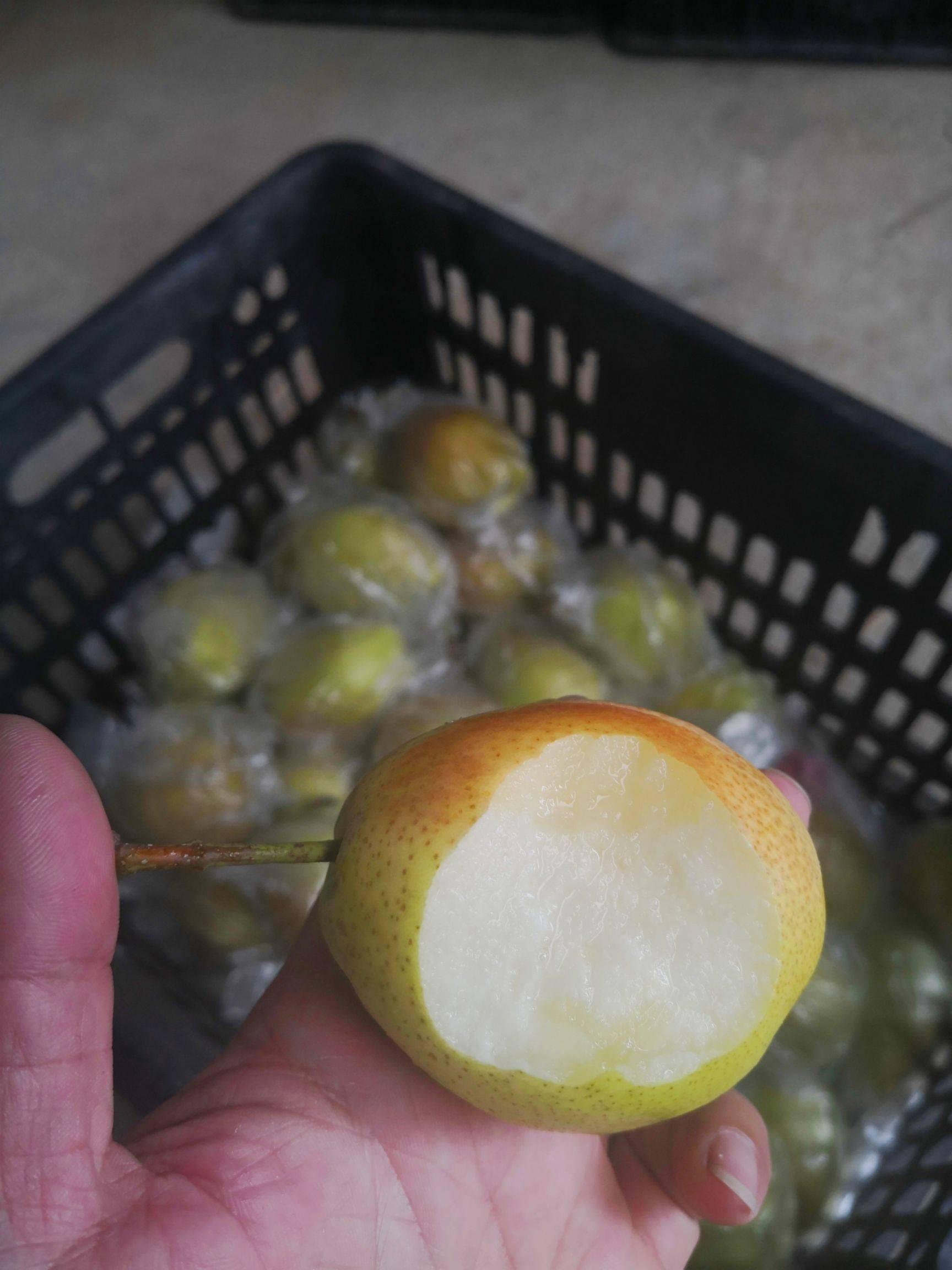 小香梨红香酥梨非库尔勒香梨