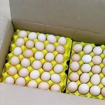 白蛋 粉蛋 土鸡蛋