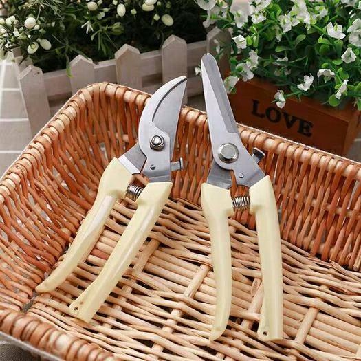 乐清市修枝剪刀 不锈钢树枝修枝剪摘水果花木剪 园林果树花卉枝嫁接园艺剪刀工具