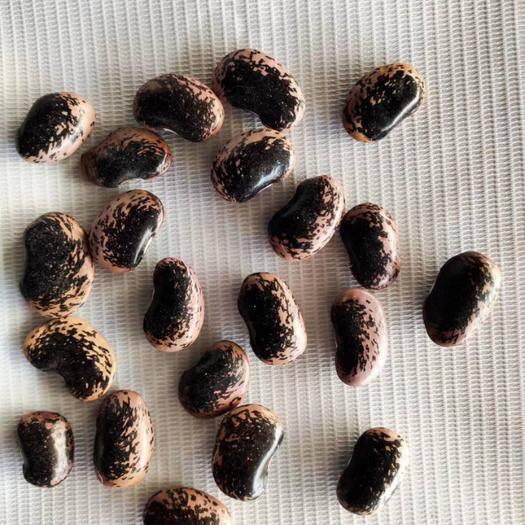 廣州白云區 黑蕓豆  腎豆