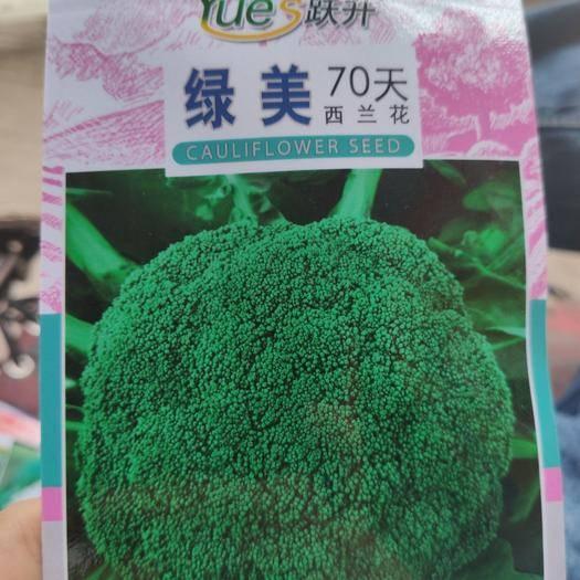 商丘夏邑县 西兰花种子