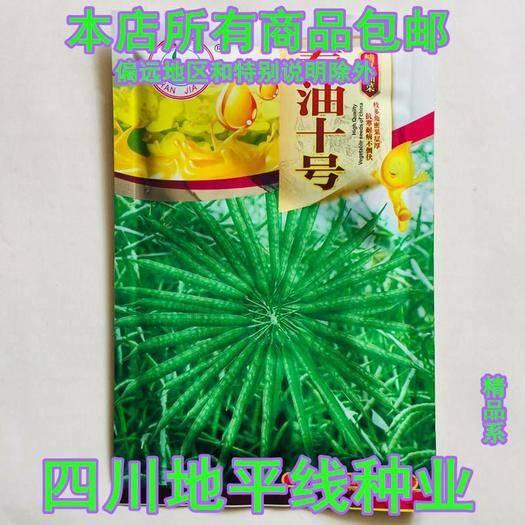 南充油菜籽種子 秦油10號種子包郵