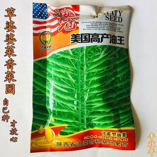 沭陽縣 油菜籽種子美國高產油王油菜籽種子包郵