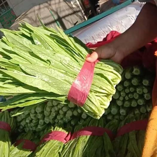 邯郸永年区 永年油麦菜一年四季供应