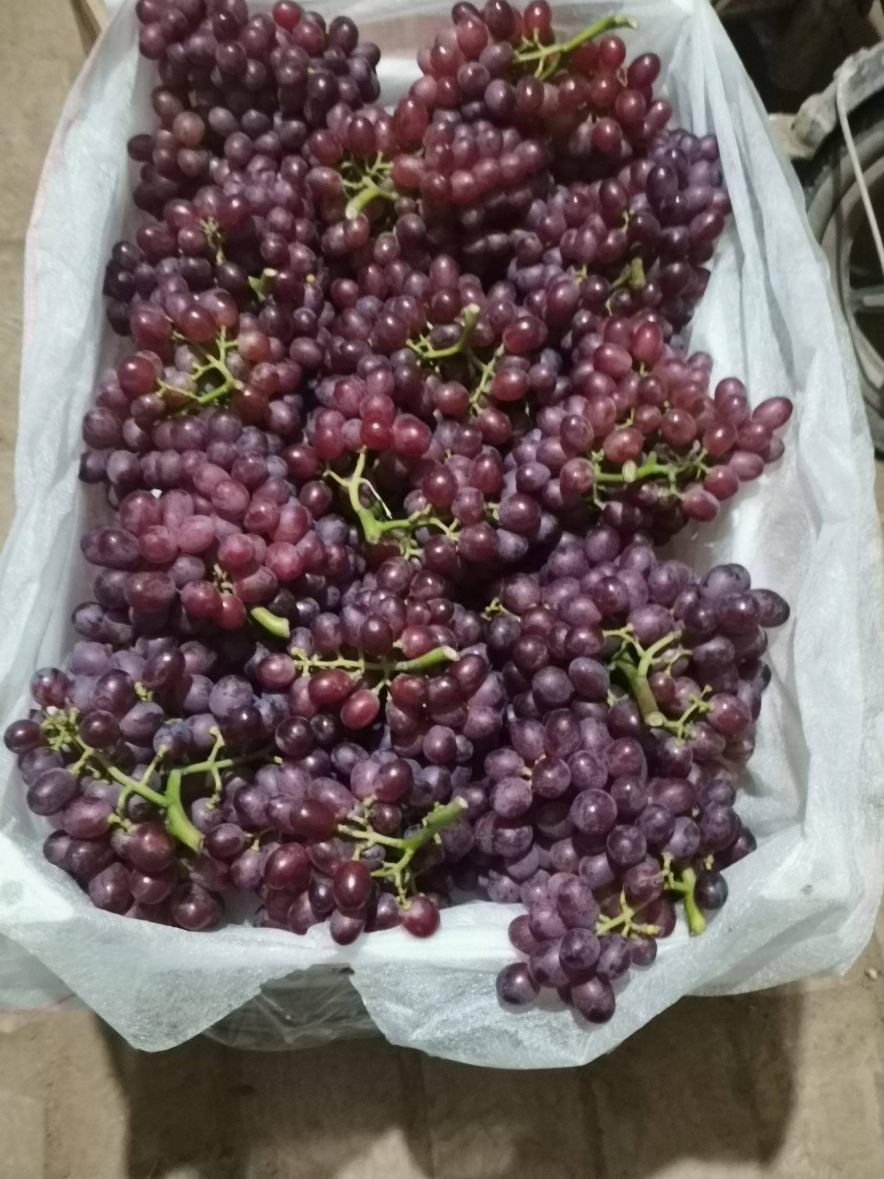克伦生葡萄 1-1.5斤 5%以下 1次果