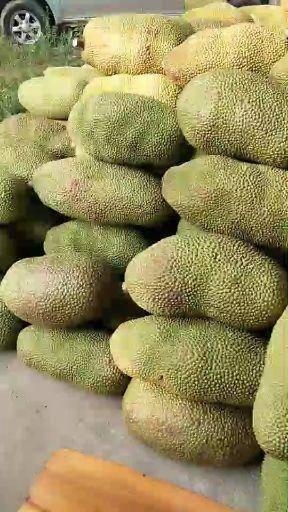 萬寧萬寧市 海南菠蘿蜜馬來一號批發零售