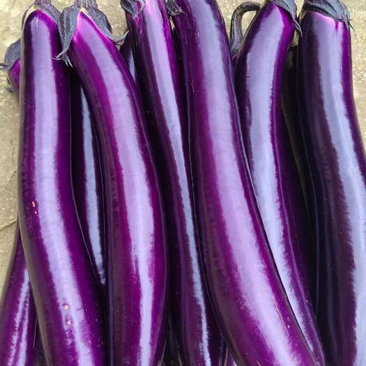 镇宁布依族苗族自治县紫长茄 精品紫红长茄,烧烤茄,合作社直供。