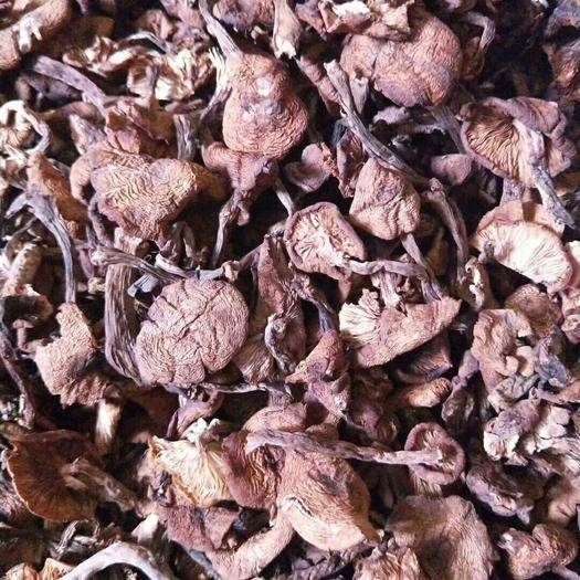 黑龙江省哈尔滨市尚志市 朝鲜榛蘑 一手货源 根据市场行情随时调整价格实物拍摄