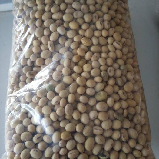 涡阳县齐黄34黄豆 安徽涡阳新黄豆上市需要的提前预定,质量水分都很好