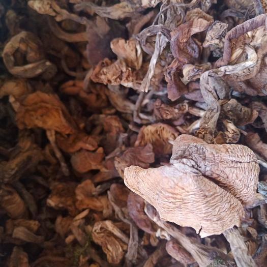 黑龙江省大兴安岭地区加格达奇区榛蘑 纯野生蘑菇  纯晾晒  无任何添加剂