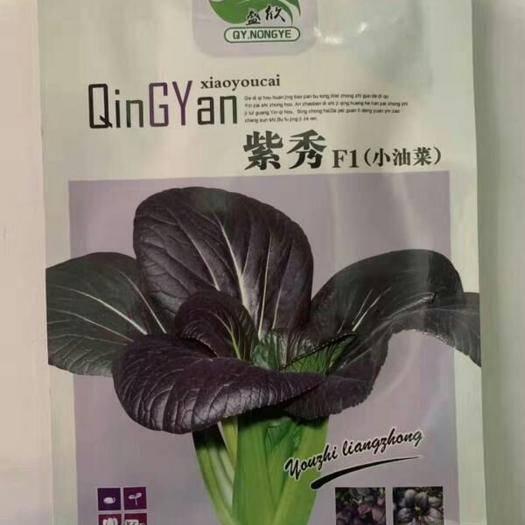 淮安淮安区紫油菜种子 盛欣紫秀小油菜种子国外引进养生特种蔬菜品种品质佳营养丰富