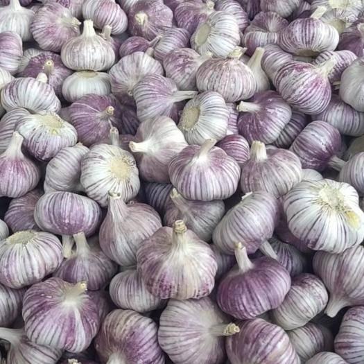 金鄉縣 金鄉大蒜產地直銷、一噸起售、保證質量、代發全國市場。