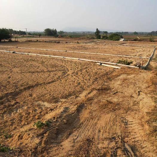 海南省东方市东方市水田 需要租地承包地的请联系我,或者需要购买蔬菜类等等都可以联系我