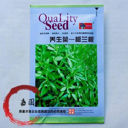 成都锦江区板兰根种子 板蓝根种子新种子包邮