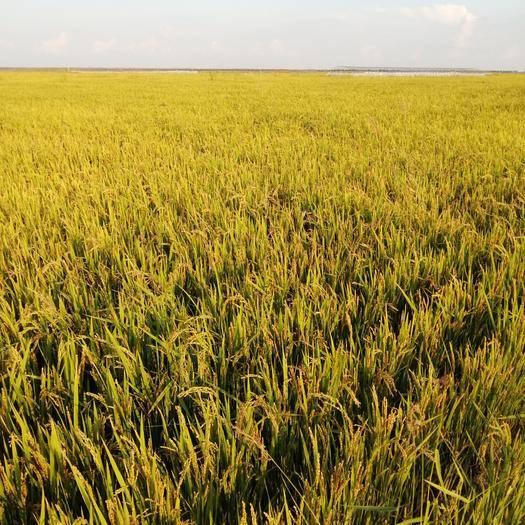 黑龙江省齐齐哈尔市依安县水田 转让 5~10年 500~1000亩