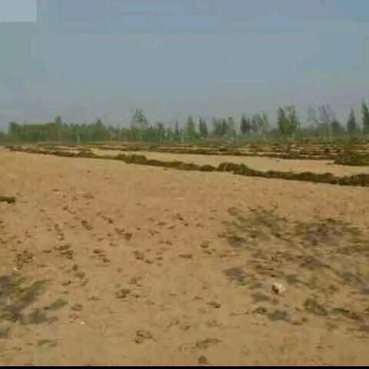河北省邢台市威县沙地 沙土地500亩