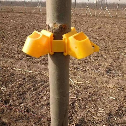陕西省西安市新城区植物缺素防治 大树支撑套