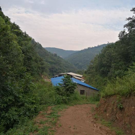 云南省楚雄彝族自治州禄丰县有林地 生态种植,养殖场地寻求合作