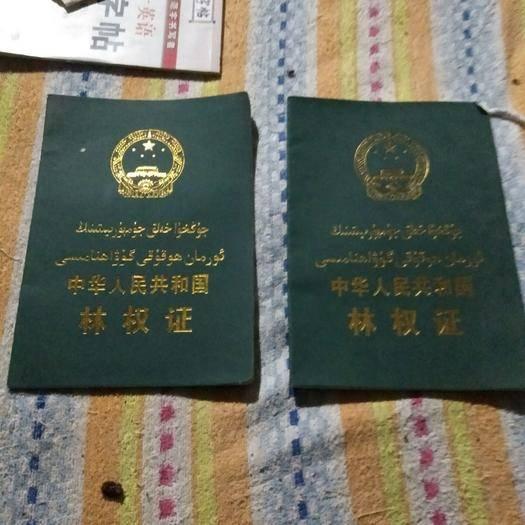 新疆维吾尔自治区巴音郭楞蒙古自治州和硕县果园 找合伙人,非诚勿扰!