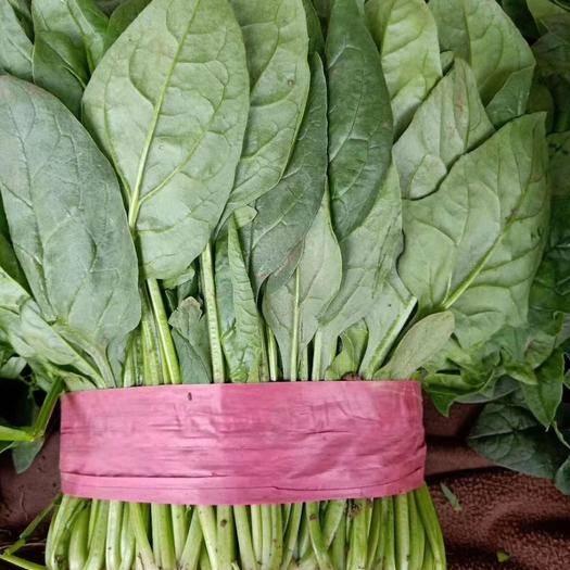 河北省邯郸市丛台区 菠菜,香菜,油麦,茼蒿,生菜