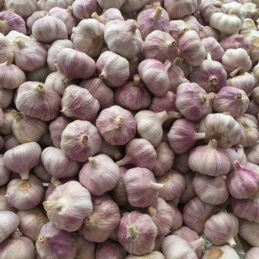 金鄉縣 雙盈蒜業、專注大蒜、儲存加工、物流全國