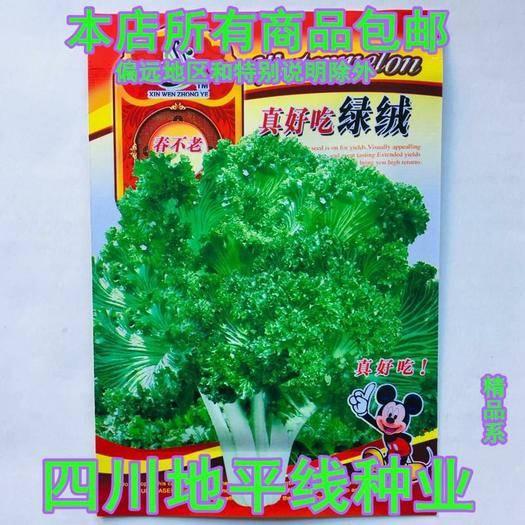 南充 苦苣种子