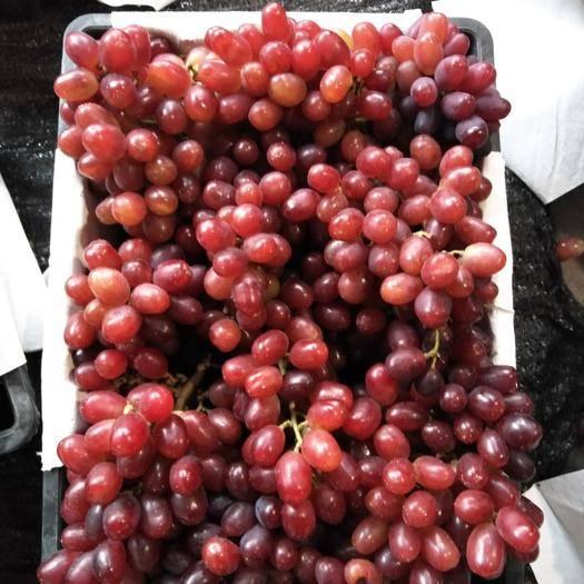 兴安县温克葡萄 味道好,果子漂亮