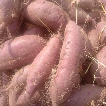 紫罗兰紫薯 3两以上精品紫罗兰