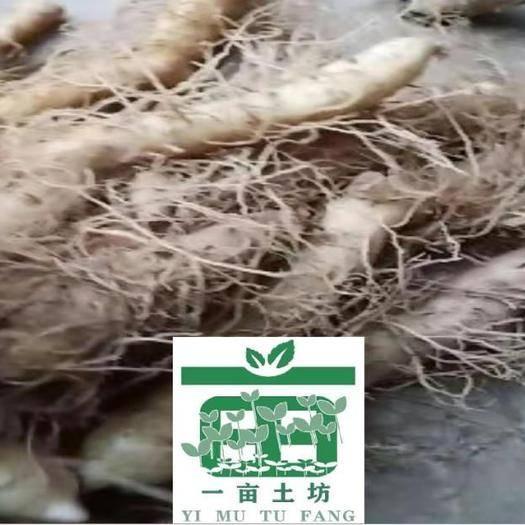 隆回縣 湖南湘玉竹 三年種莖 管理簡單 畝產10000斤 畝收益上