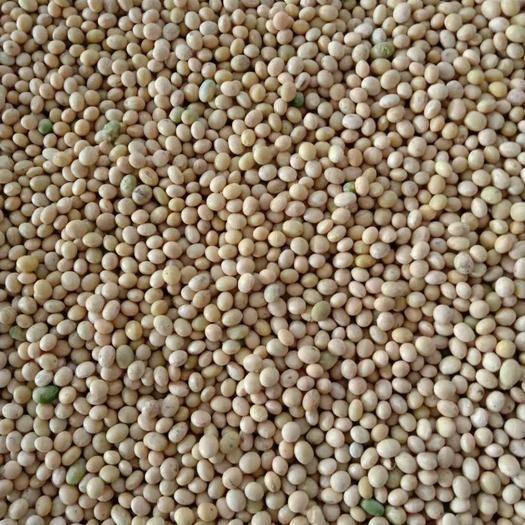石家庄冀豆12 高蛋白豆