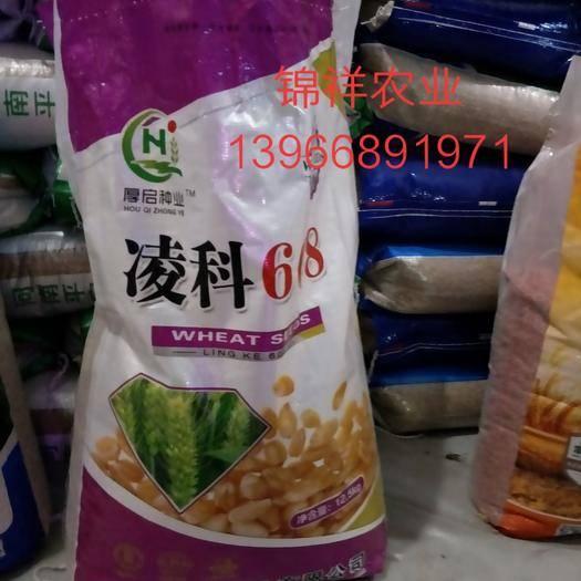 亳州譙城區小麥種子 凌科608  高產好品種