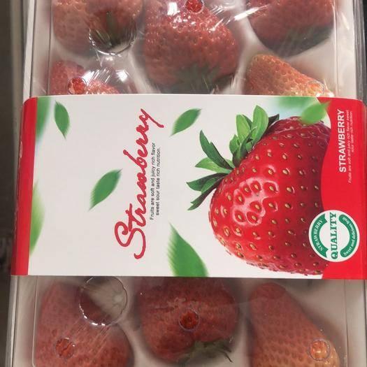 東港市九九草莓 東港膠盒1115 20頭裝尋求商超采購批發產地直供