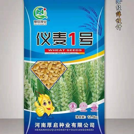 亳州譙城區小麥種子 儀麥1號